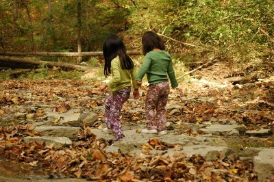 Woods_october_2007_082
