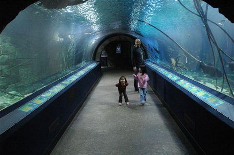Aquarium_052