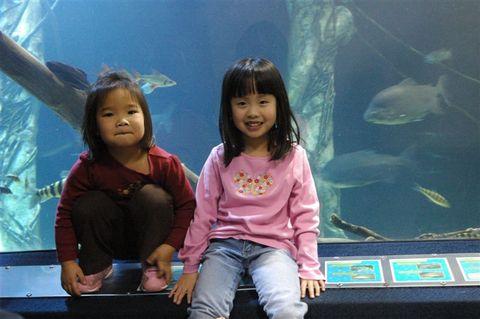 Aquarium_059