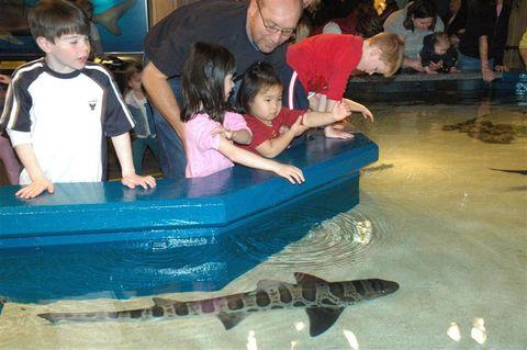 Aquarium_079